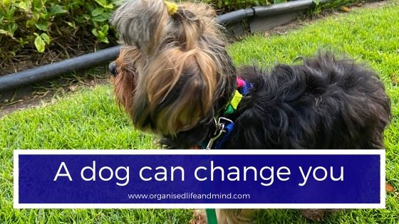 A dog can change you